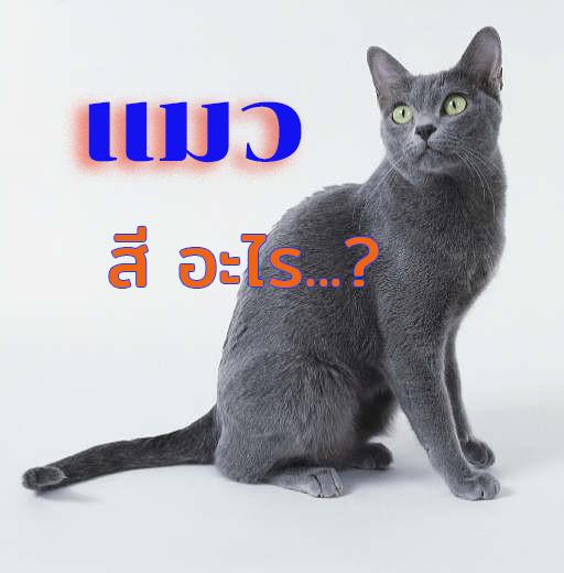แมวสีสวาดหรือแมวโคราช
