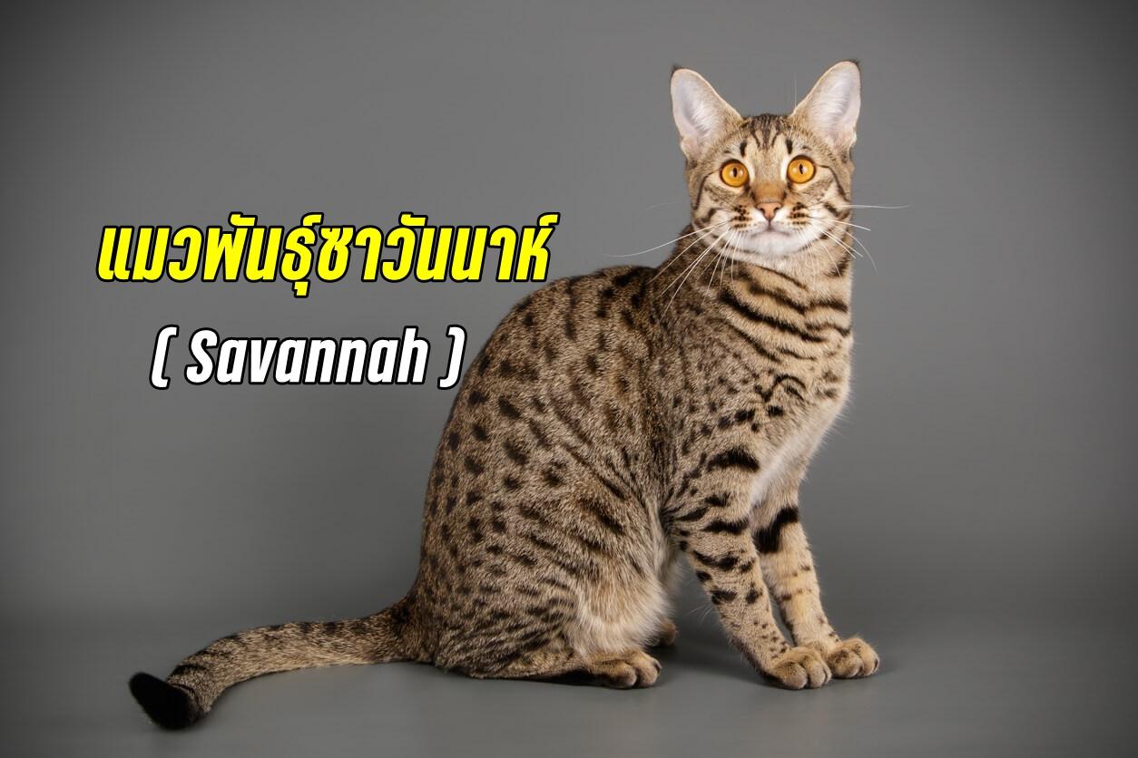 ซาวันนาห์