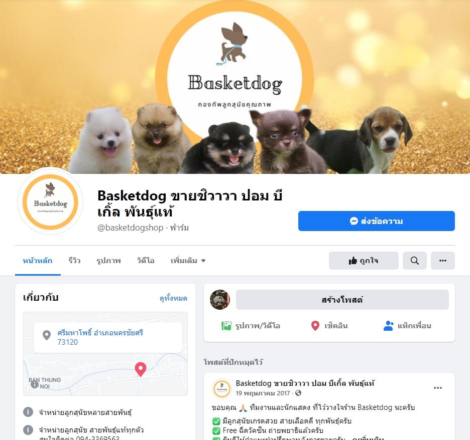 หมาบีเกิล ซื้อ Baskedog