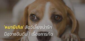 หมาบีเกิล