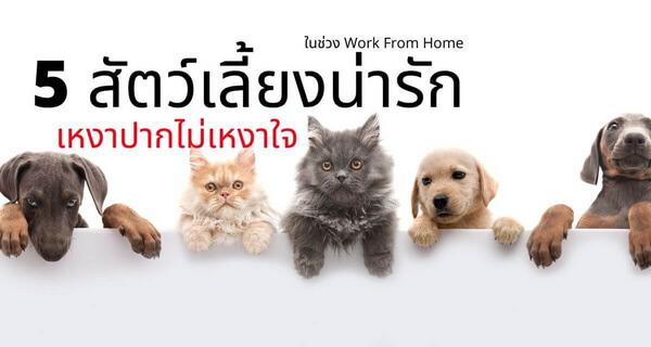 5 สัตว์เลี้ยงสุดน่ารักเหงาปากไม่เหงาในช่วง Work From Home