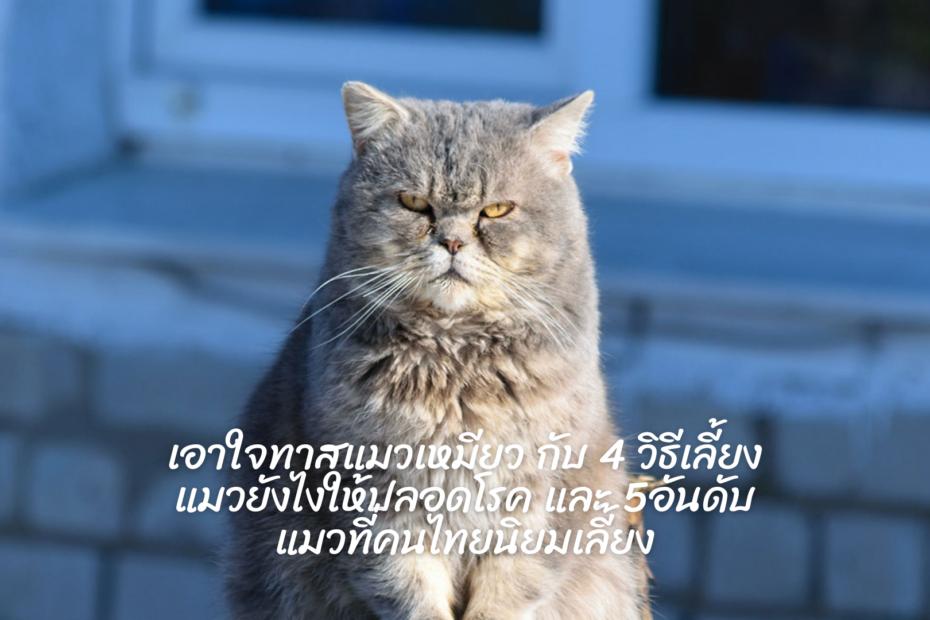 ทาสแมวเหมียว-กับ-4-วิธีเลี้ยงแมวยังไงให้ปลอดโรค-และ-5อันดับแมวที่คนไทยนิยมเลี้ยง-1