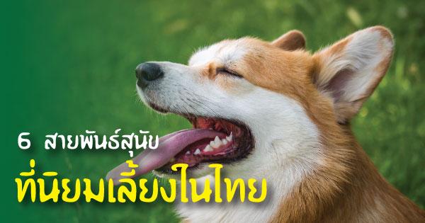 6 สายพันธุ์สุนัขที่นิยมเลี้ยงในไทย