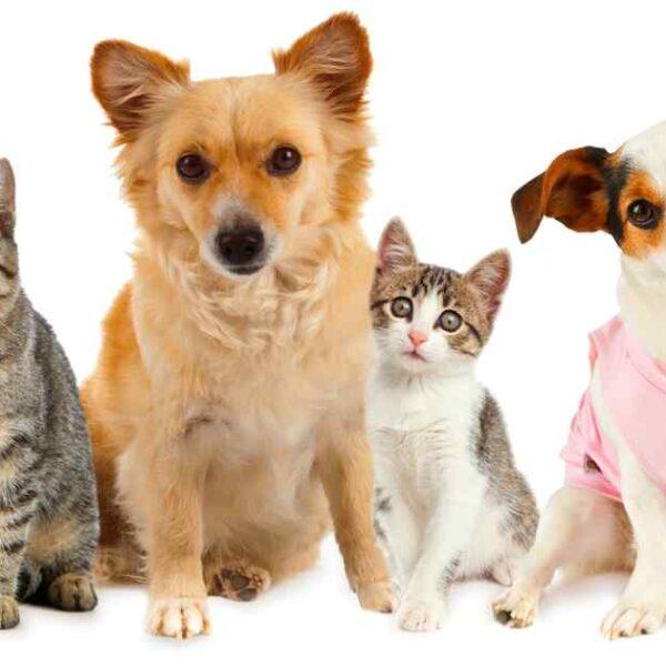 5 สัตว์เลี้ยงสุดน่ารัก ที่เหล่าคนรักสัตว์ต้องหลงรักอย่างแน่นอน